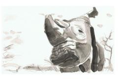 Das letzte männliche Nördliche Breitmaulnashorn